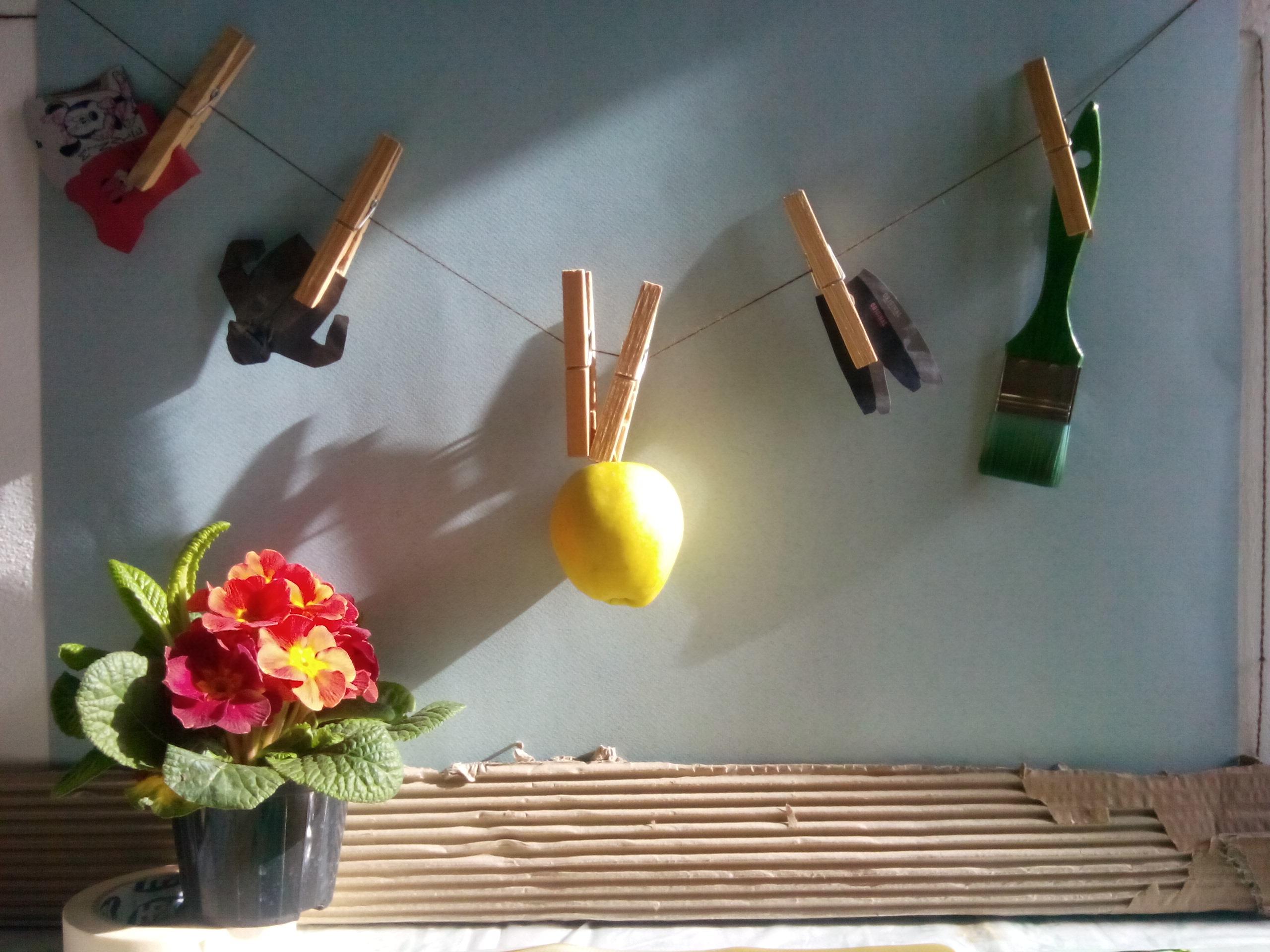 Фото комнатных цветов с названиями цикламен